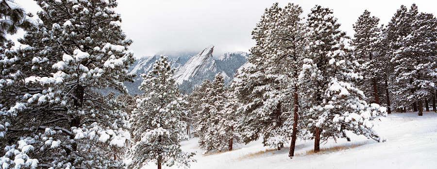 Flatrions_snow_trees_0202_900